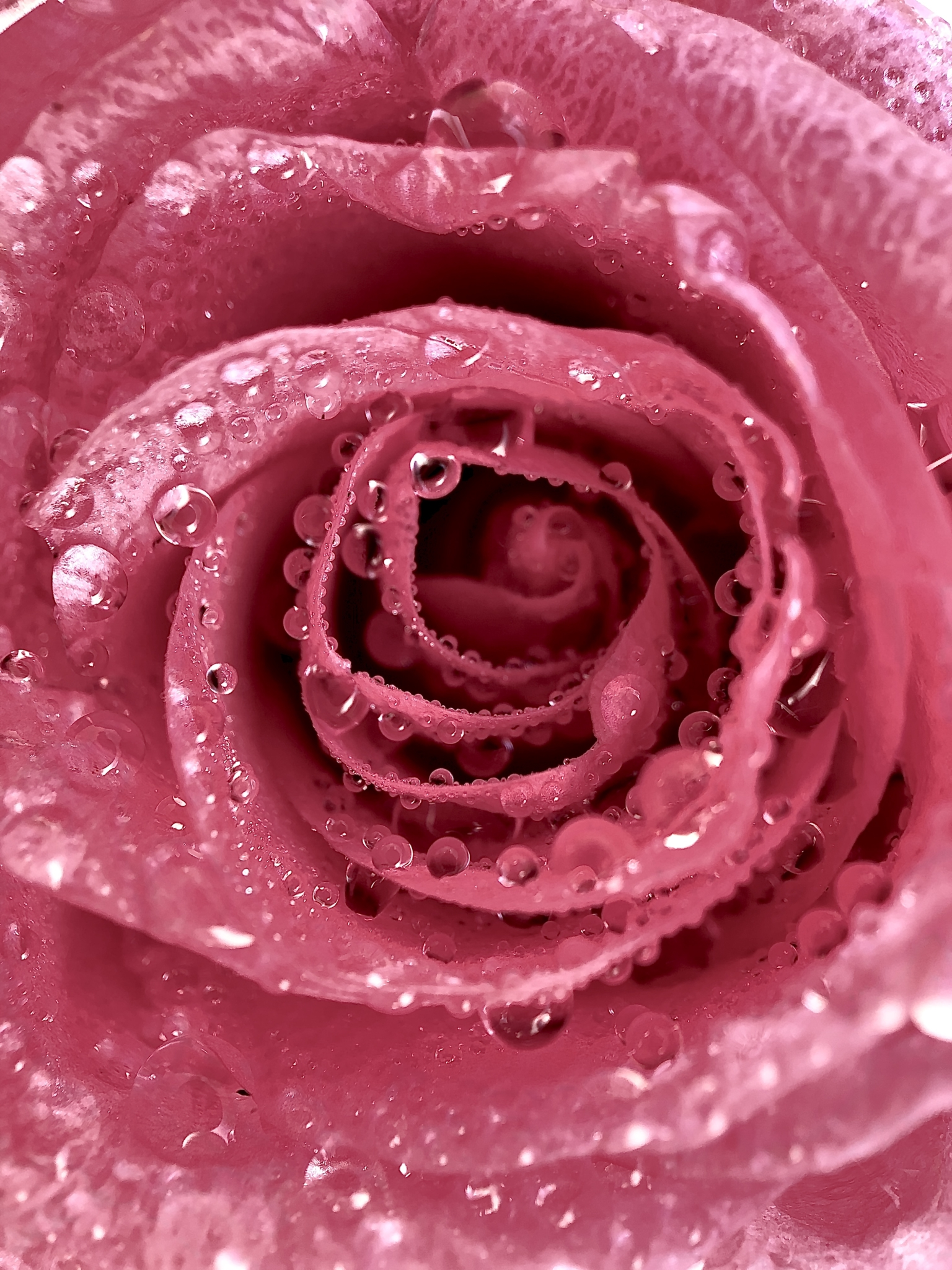 photo by Julie Copyright